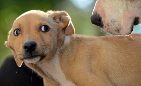 Rescue Homes For Aggressive Dogs