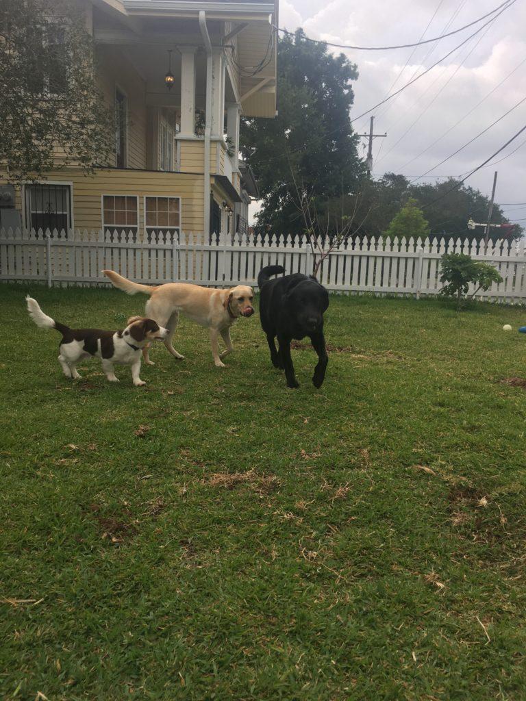 may 2017 u2013 iffy dog